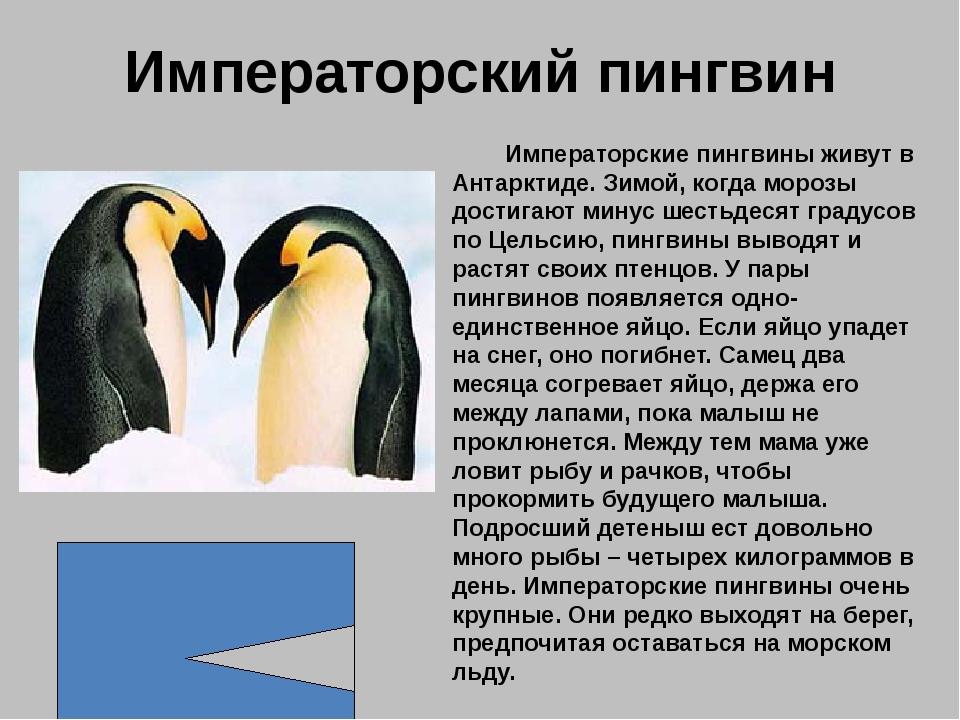 На белых страницах записаны животные, численность которых всегда была невелик...