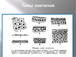 Типы эпителия