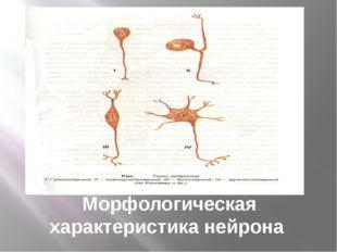 Морфологическая характеристика нейрона
