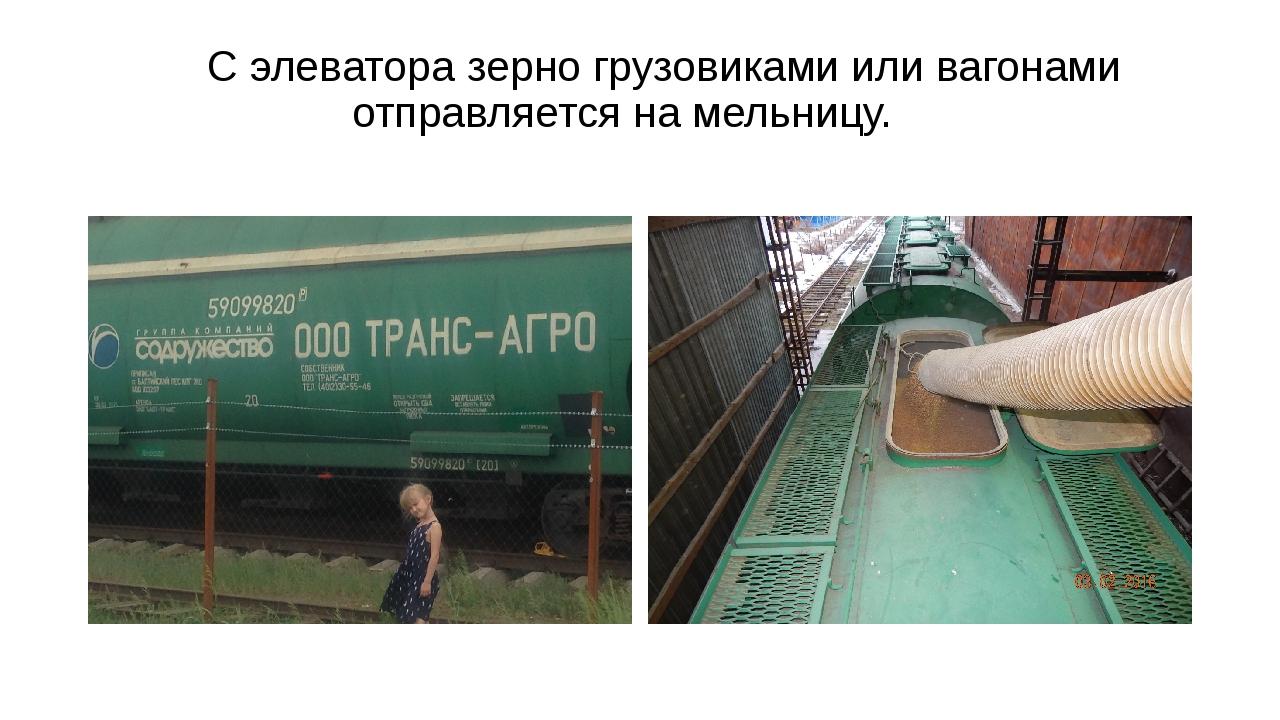 С элеватора зерно грузовиками или вагонами отправляется на мельницу.