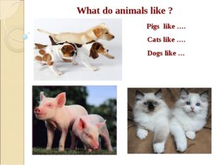 What do animals like ? Pigs like …. Cats like …. Dogs like …