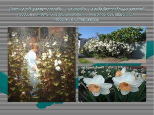 Цветы в саду растут повсюду – и на клумбах, и в виде беспорядочных зарослей у