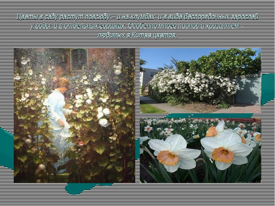 Цветы в саду растут повсюду – и на клумбах, и в виде беспорядочных зарослей у...