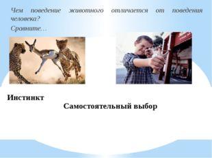 Инстинкт Чем поведение животного отличается от поведения человека? Сравните…