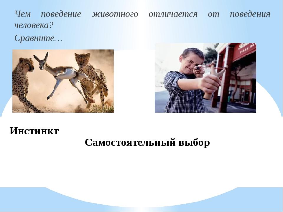 Инстинкт Чем поведение животного отличается от поведения человека? Сравните…...