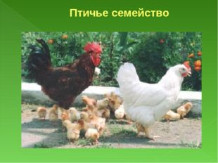 Птичье семейство