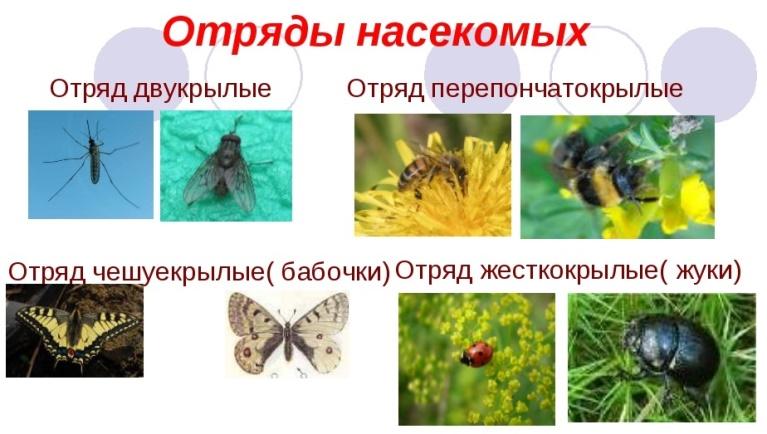hello_html_1319a36.jpg