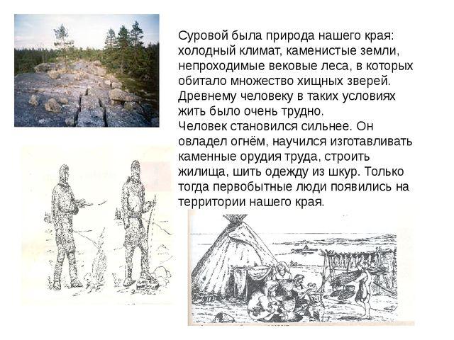 Суровой была природа нашего края: холодный климат, каменистые земли, непрохо...