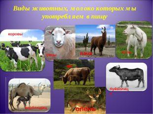 Виды животных, молоко которых мы употребляем в пищу коровы