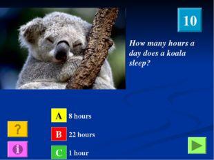 How many hours a day does a koala sleep? A B C 8 hours 22 hours 1 hour 10