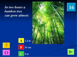 In two hours a bamboo tree can grow almost: A B C 1.2 m 10 cm 5 m 16