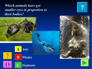 A B C Ants Whales Elephants Which animals have got smaller eyes in proportion