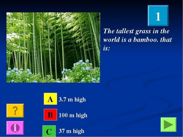 The tallest grass in the world is a bamboo. that is: A B C 3.7 m high 100 m h...