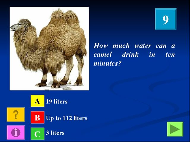 How much water can a camel drink in ten minutes? A B C 19 liters Up to 112 li...