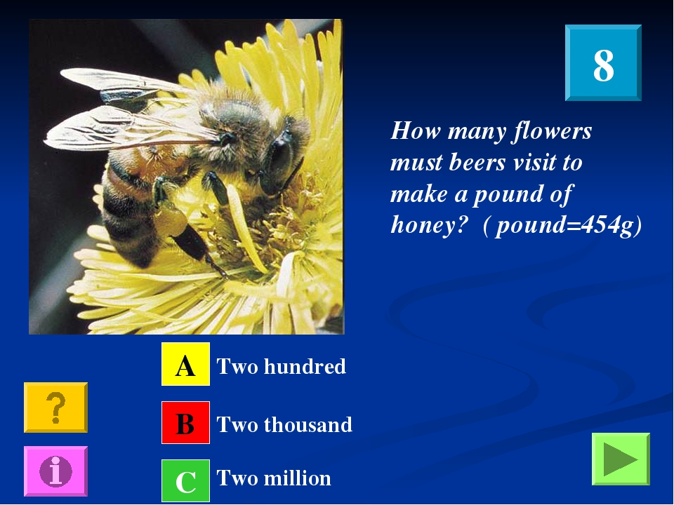 How many flowers must beers visit to make a pound of honey? ( pound=454g) A B...