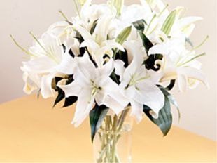 * White Lilies Tulips