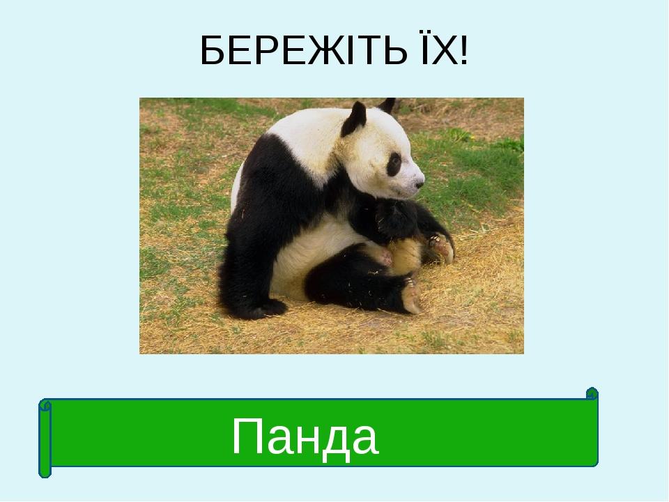 БЕРЕЖІТЬ ЇХ! Панда