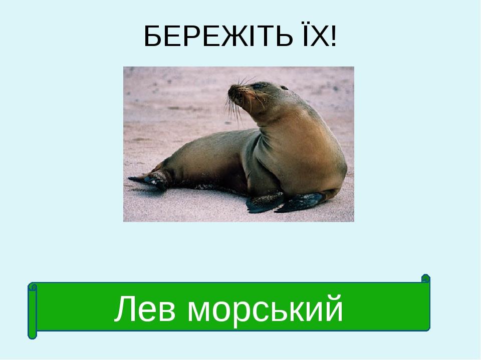 БЕРЕЖІТЬ ЇХ! Лев морський