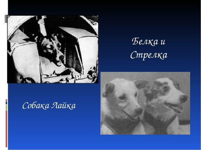Собака Лайка Белка и Стрелка