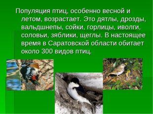 Популяция птиц, особенно весной и летом, возрастает. Это дятлы, дрозды, вальд