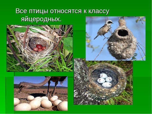 Все птицы относятся к классу яйцеродных.
