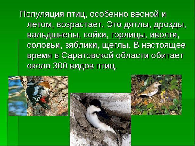 Популяция птиц, особенно весной и летом, возрастает. Это дятлы, дрозды, вальд...