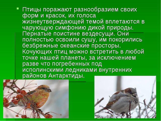 Птицы поражают разнообразием своих форм и красок, их голоса жизнеутверждающей...