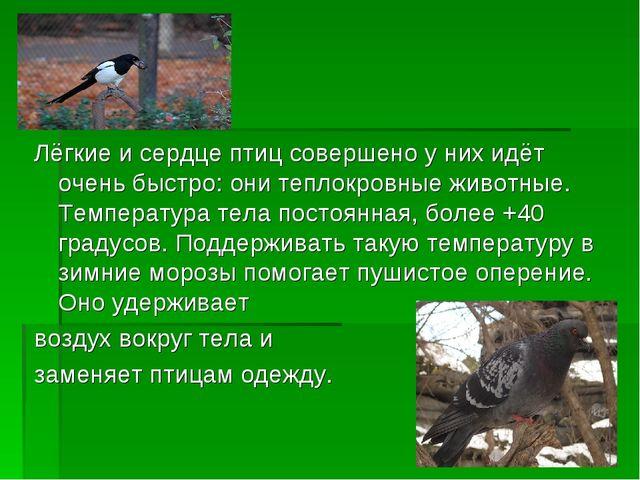 Лёгкие и сердце птиц совершено у них идёт очень быстро: они теплокровные живо...
