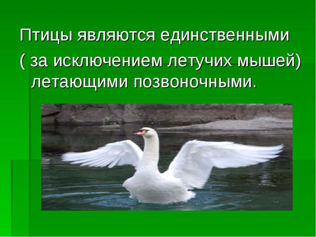 Птицы являются единственными ( за исключением летучих мышей) летающими позвон...