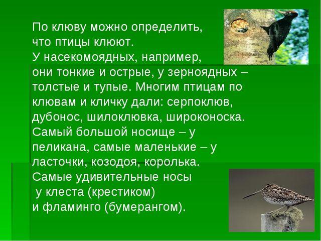 По клюву можно определить, что птицы клюют. У насекомоядных, например, они то...