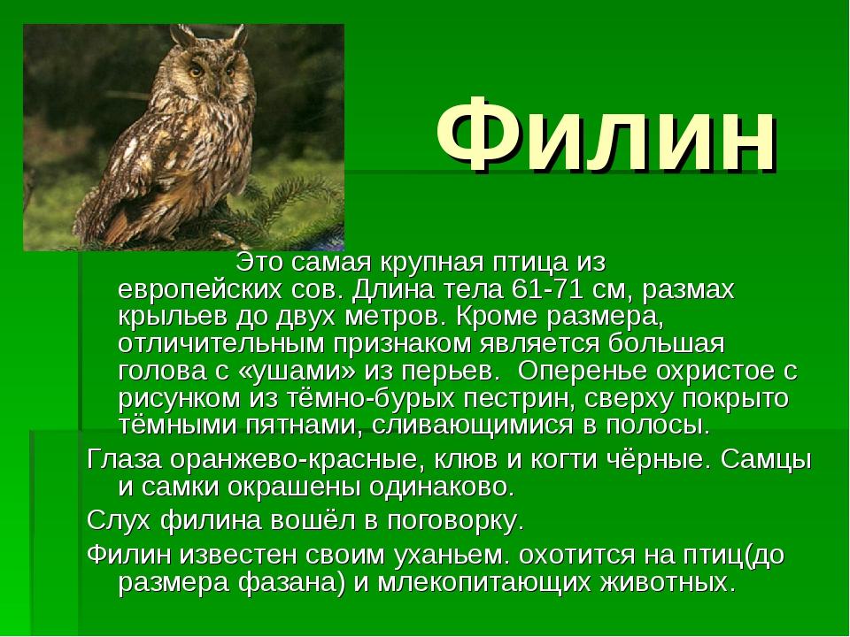 Филин Это самая крупная птица из европейских сов. Длина тела 61-71 см, размах...