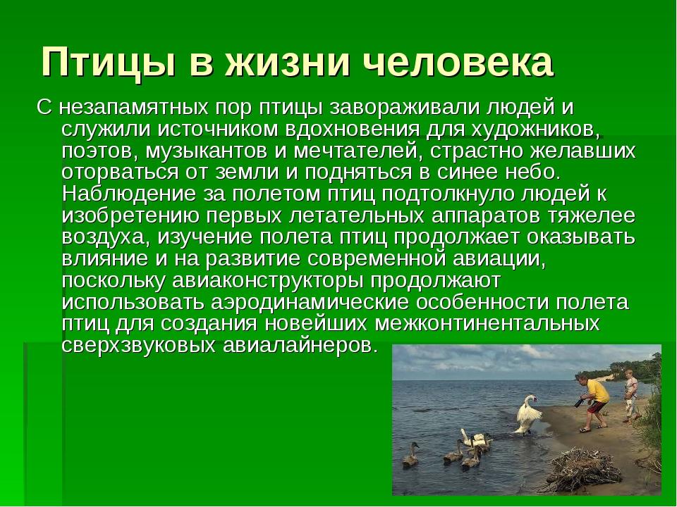 Птицы в жизни человека С незапамятных пор птицы завораживали людей и служили...
