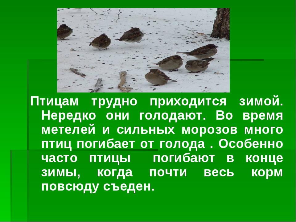 Птицам трудно приходится зимой. Нередко они голодают. Во время метелей и силь...