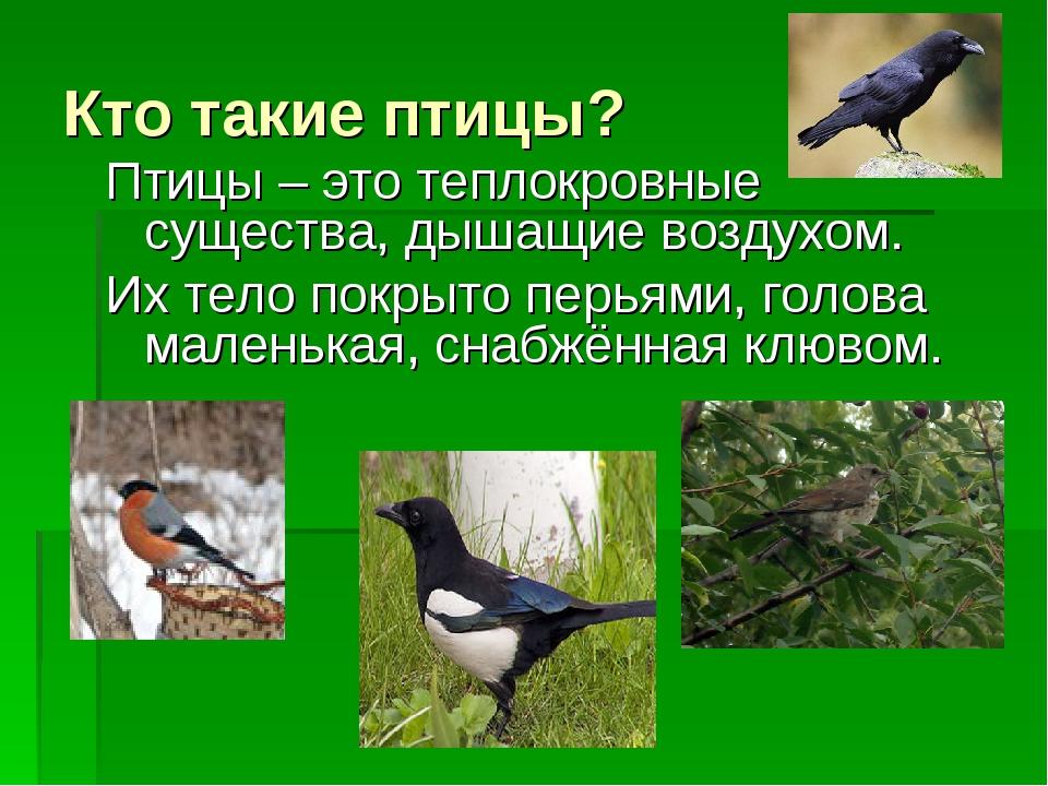 Кто такие птицы? Птицы – это теплокровные существа, дышащие воздухом. Их тело...