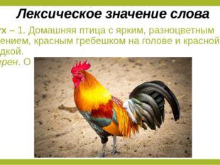Петух – 1. Домашняя птица с ярким, разноцветным оперением, красным гребешком