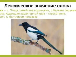 Сорока – 1. Птица семейства вороновых, с белыми перьями в крыльях, издающая х
