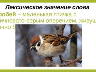 Воробей – маленькая птичка с коричневато-серым оперением, живущая обычно близ