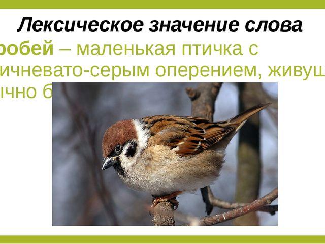 Воробей – маленькая птичка с коричневато-серым оперением, живущая обычно близ...