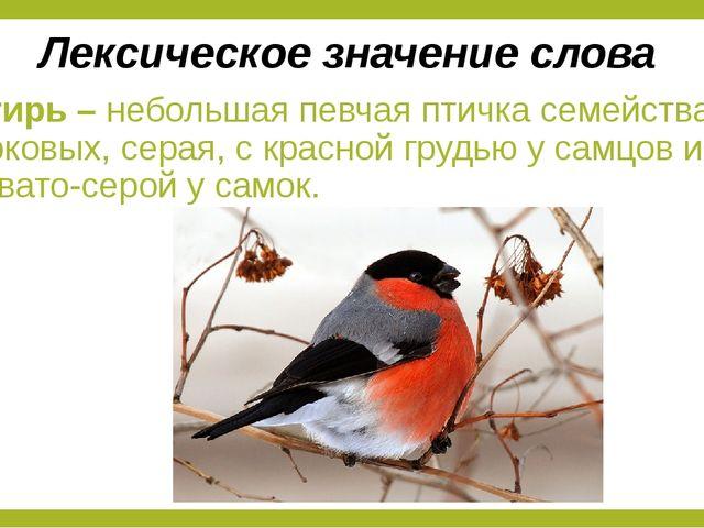 Снегирь – небольшая певчая птичка семейства вьюрковых, серая, с красной грудь...