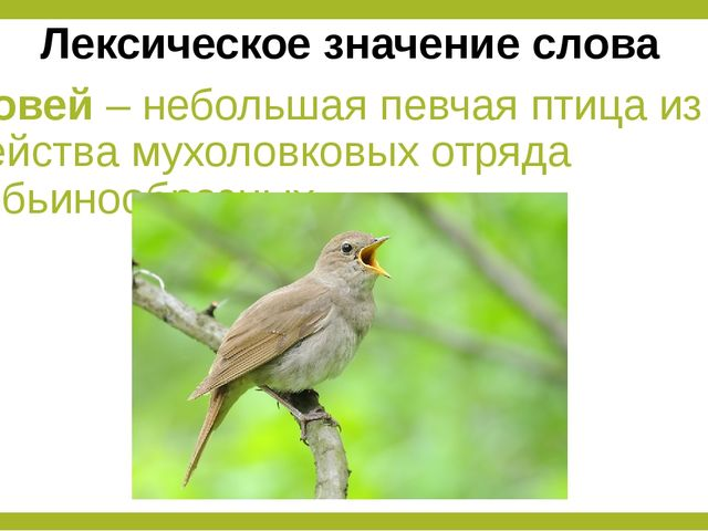 Соловей – небольшая певчая птица из семейства мухоловковых отряда воробьинооб...