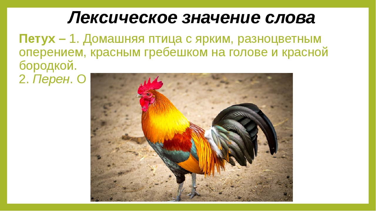 Петух – 1. Домашняя птица с ярким, разноцветным оперением, красным гребешком...