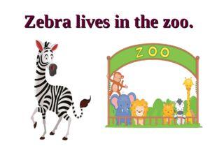 Zebra lives in the zoo.