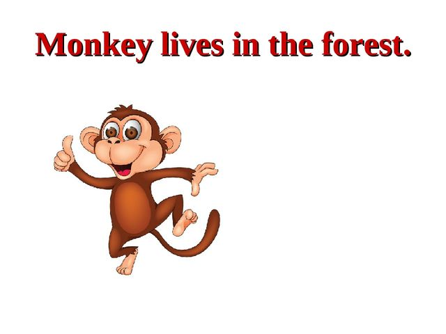 Monkey lives in the forest.
