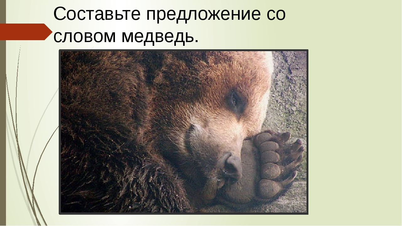 Составьте предложение со словом медведь.