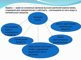 Функции корня: Поглощение воды и минеральных веществ; Проведение веществ; Орг