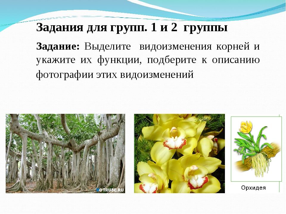 Задания для групп. 1 и 2 группы Задание: Выделите видоизменения корней и укаж...