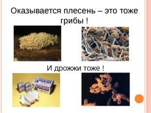 Оказывается плесень – это тоже грибы ! И дрожжи тоже !