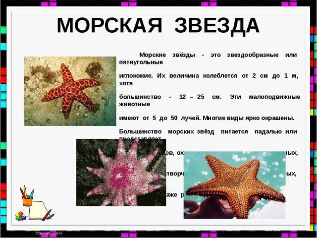 МОРСКАЯ ЗВЕЗДА Морские звёзды - это звездообразные или пятиугольные иглокожие...