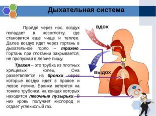 Пройдя через нос, воздух попадает в носоглотку, где становится еще чище и те