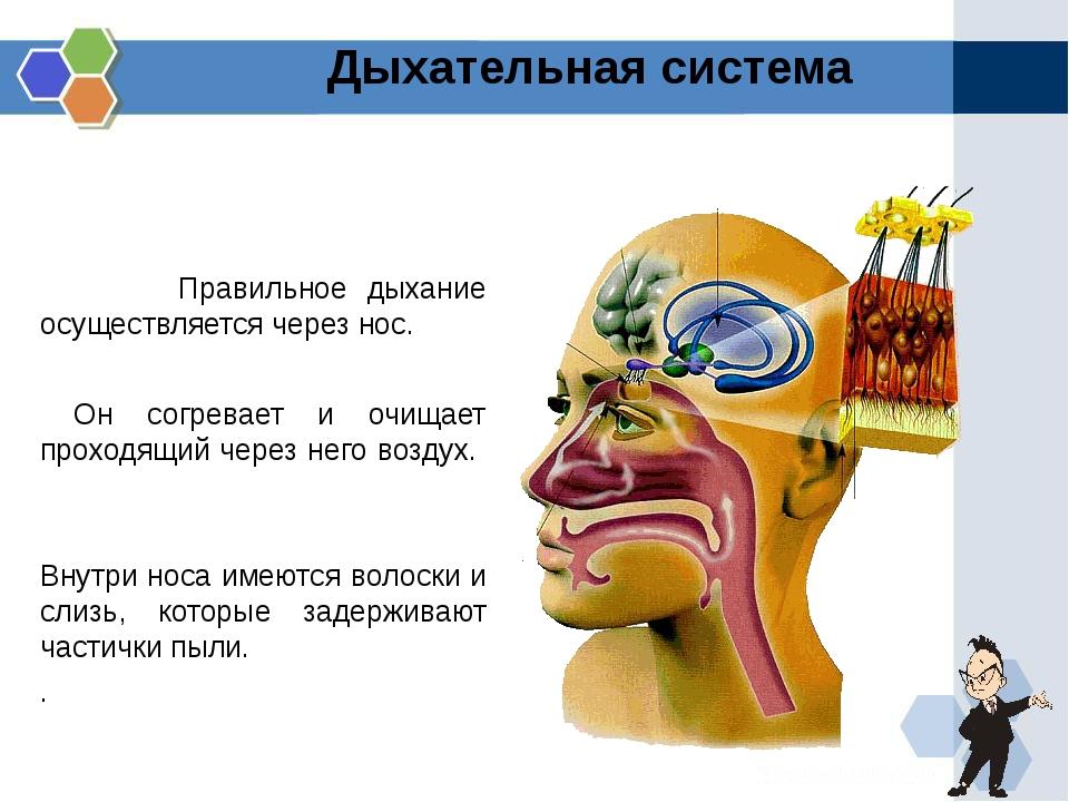 Правильное дыхание осуществляется через нос. Он согревает и очищает проходящ...